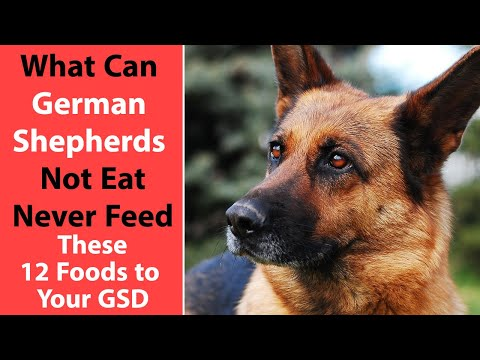 What Can German Shepherds Not Eat: Never Feed These 12 Foods to Your GSD