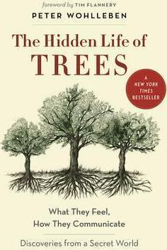 The Hidden Life of Trees : What They Feel, How They CommunicateA Discoveries from a Secret World